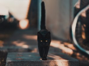 black-black-cat-blur-1510543